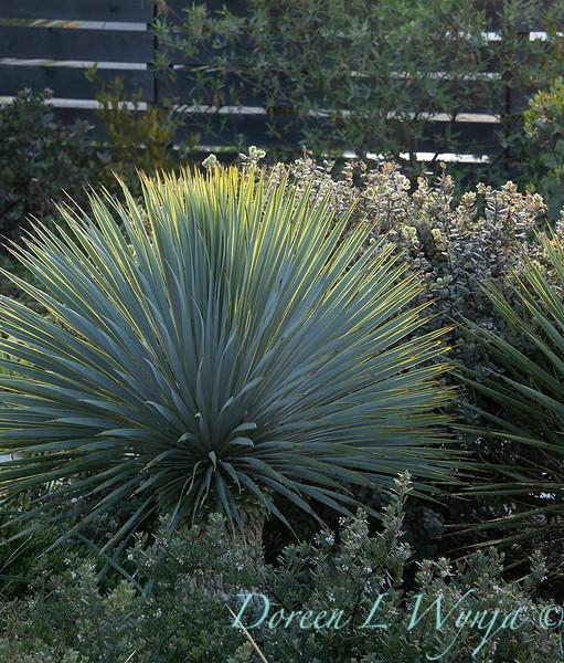 Garden at Argyle winery_1061.jpg