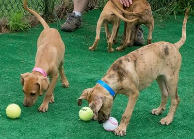 Marys Dogs 06292019