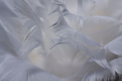 Feathers and Ribbons, January, 19, 2012
