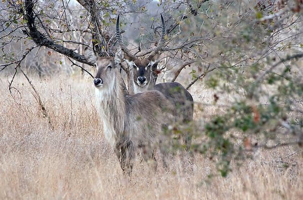Kruger Park - The Big Five (19 Photographs)