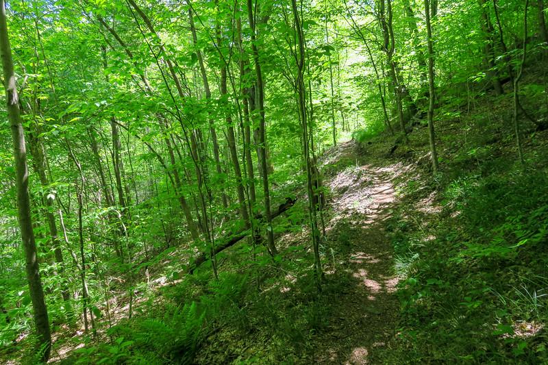 Mountains-to-Sea Trail -- 4,300'