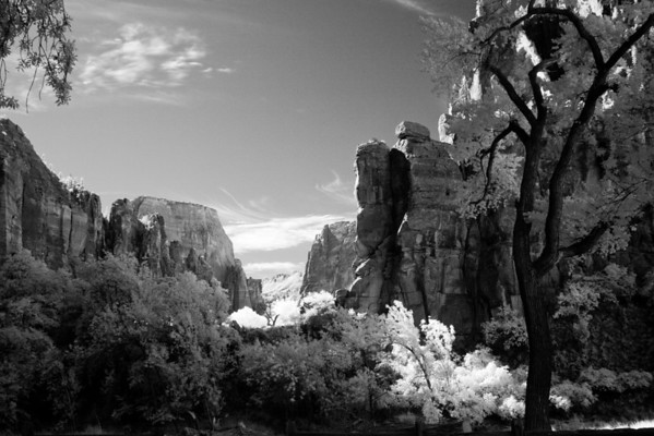 Zion National Park - Infrared B&W