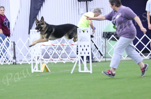 GSDCA All Breed Agility Nov JWW Sat 10 10 2015