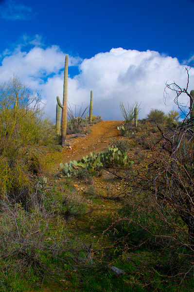 Box Canyon, AZ2.jpg