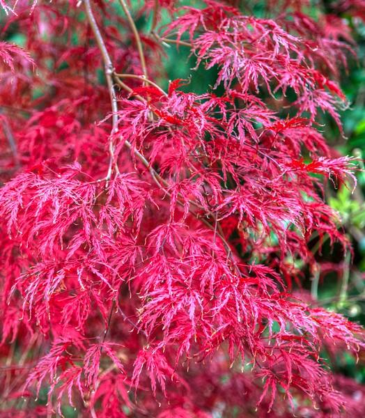 edwards garden autumn 2012--13.jpg