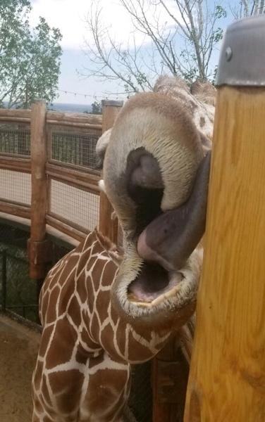 Cheyenne Mtn Zoo 2019 (1008).jpg