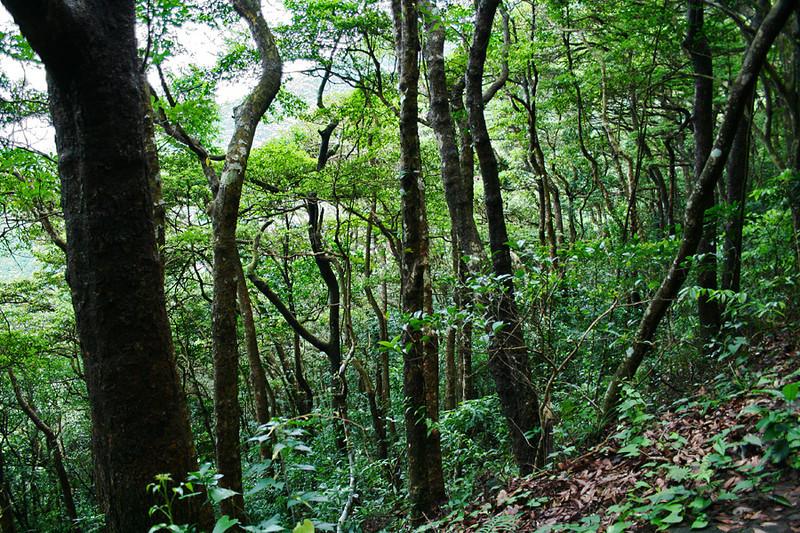 Wilson Trail Stage 2