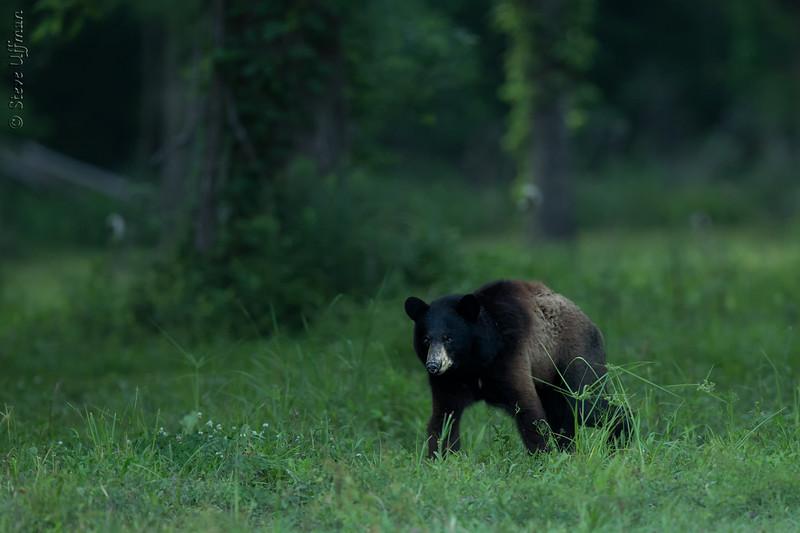 20140521-_G7Q8398vossburg-bears-Edit.jpg