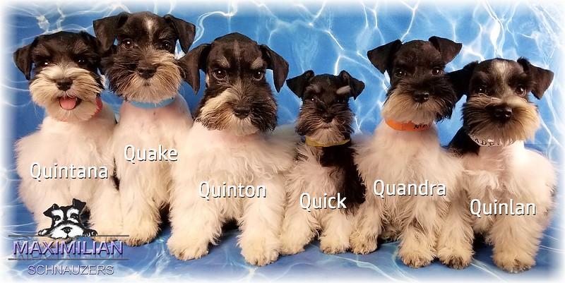 Maddie Pups 006.jpg