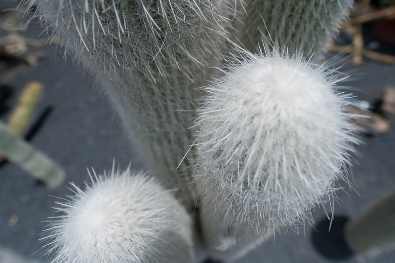 Close-up of a plant in Cactus Garden in Lanzarote, Spain