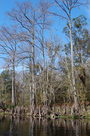 Journal Site 146: Paddling The Santa Fe River, Fort White, FL - Dec 19, 2009