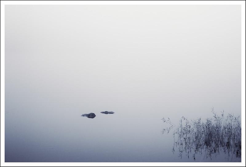 JMO_1385 rocks and bamboo in fog 3.jpg