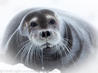 Norway Svalbard Other Wildlife