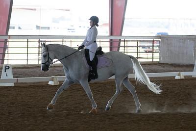 Horse 377
