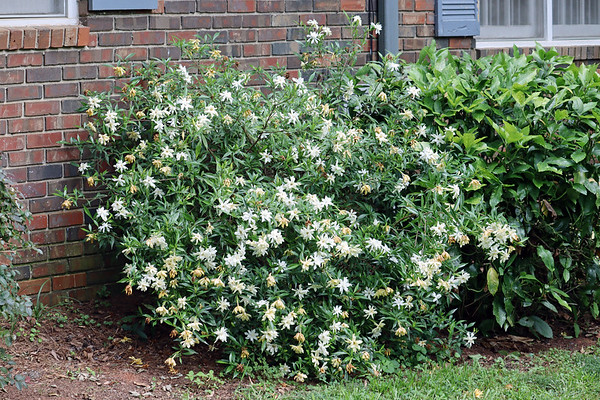 June 16:  A few more summer bloomers .  .  .