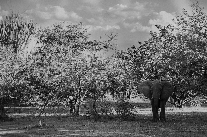 2019_06_24_Global_Malawi_ASJ_D01_Safari-30.jpg