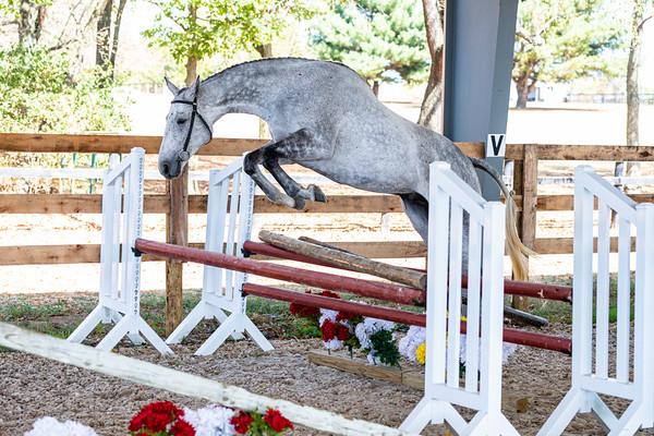 Horse 2  - Kari Provost-Wells