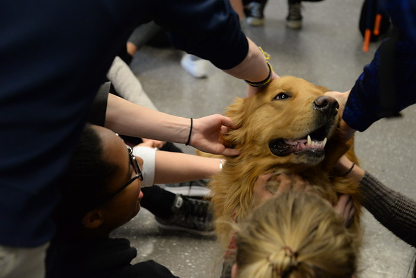 A Visit from Therapy Dogs!