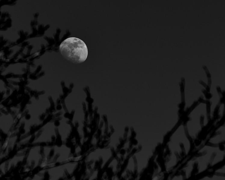 Lunar tree bw.jpg