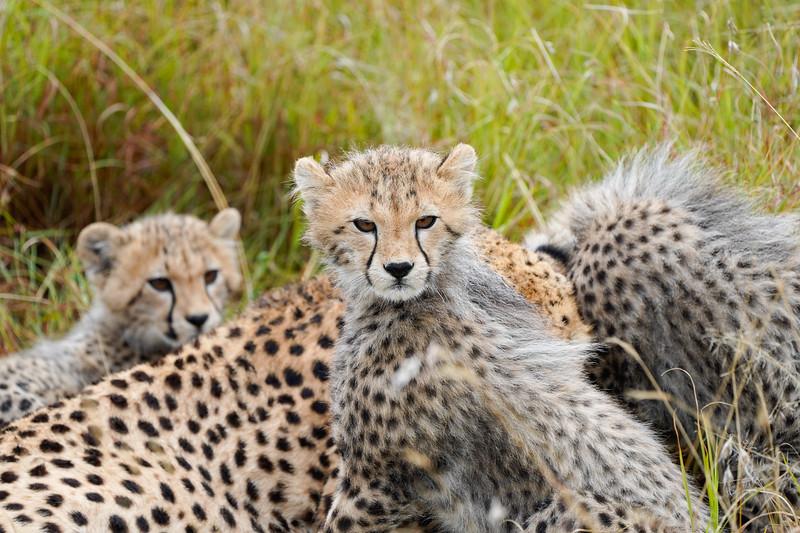 safari-2018-145.jpg
