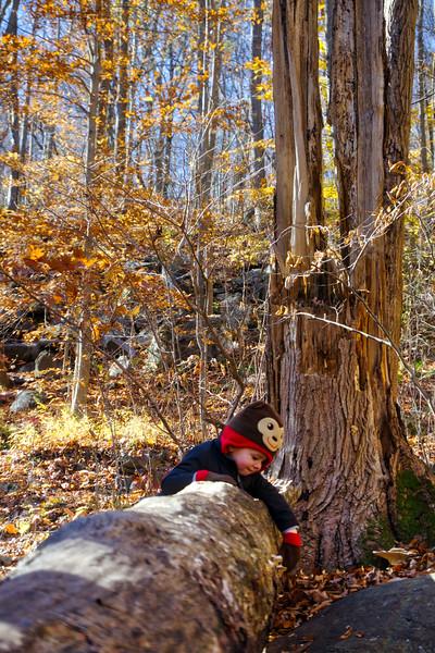 1099 - Autumn 2016 - Lucas Tree Trunk