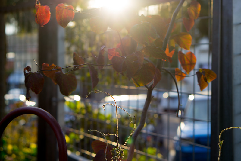 Flowerland-20.jpg