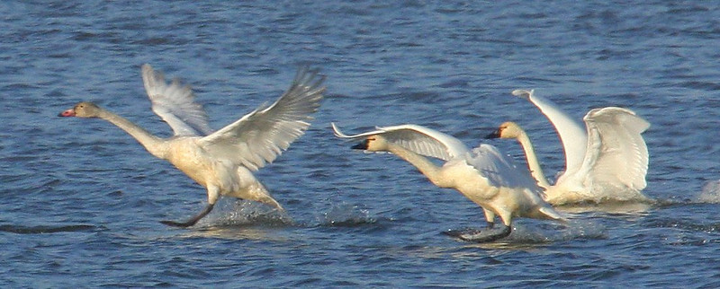 Birding on the Mississippi