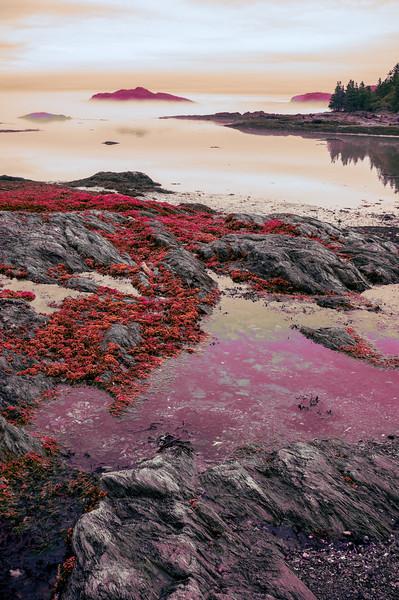 purple seashore scape.jpg