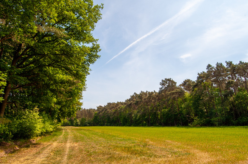 Nationaal Park Hoge Kempen - Duinengordel, omgeving Donderslag 18.jpg