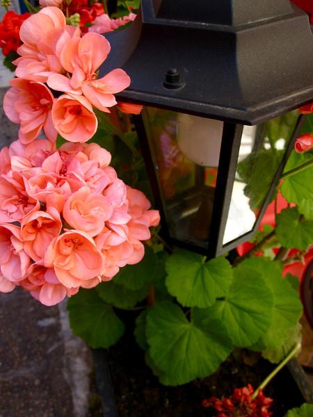 pink. lampost.JPG