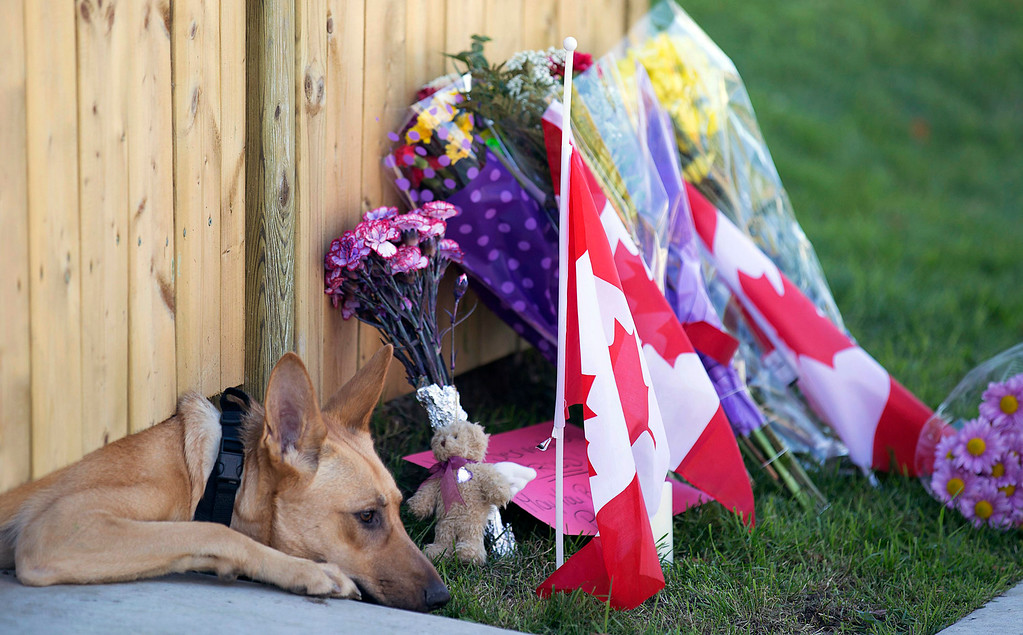 . A dog peeks out from under a gate at the Cirillo family home in Hamilton, Ontario near flowers and flags that have been left on Thursday, Oct. 23, 2014.  (AP Photo/The Canadian Press, Peter Power)