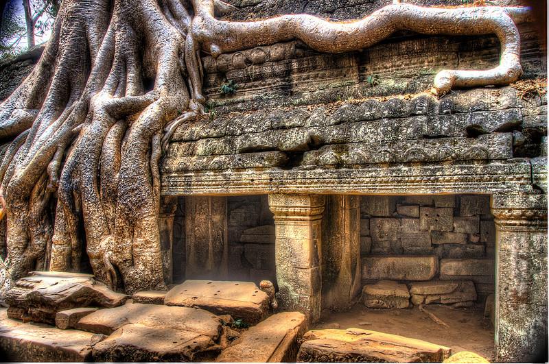 CambodiaTaPhromRootyTree&TempleDSC_4973_4_5.jpg