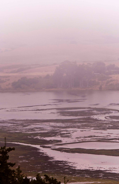 Tomales Bay wetlands near Inverness