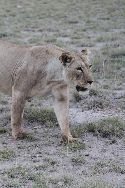 Kenya 2019 #2 1859.JPG