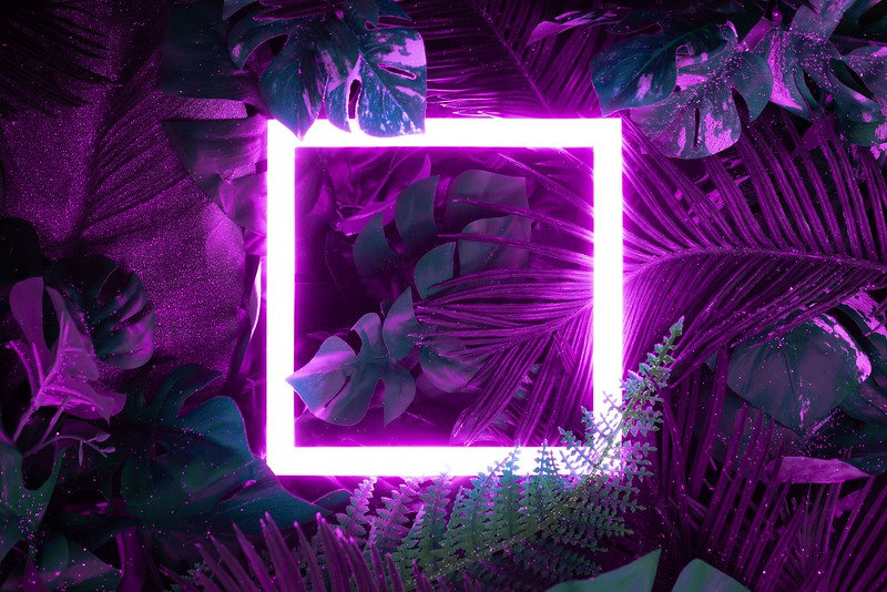Creative fluorescent color layout made of tropical leaves with neon light square. Flat lay. Nature concept.