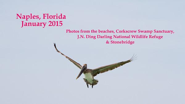2015 Naples Florida