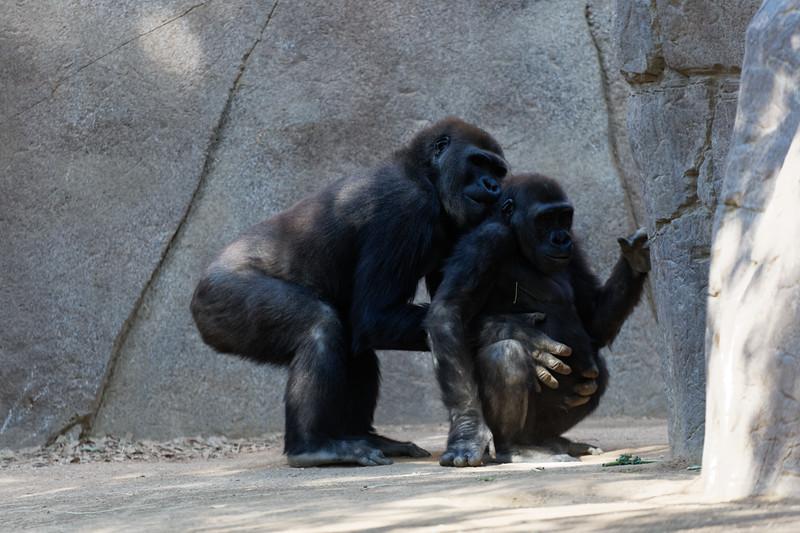 San Diego Zoo Safari Park, September 24, 2017