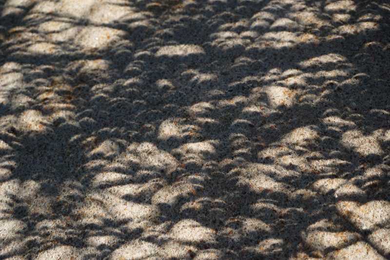 Sidewalk abstract of the eclipse through a bush.