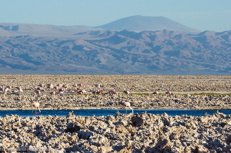 10.12_Atacama-9402-Juno Kim.jpg