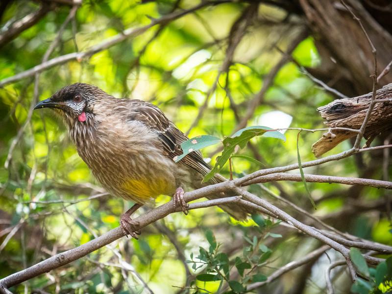 birds  000114.JPG