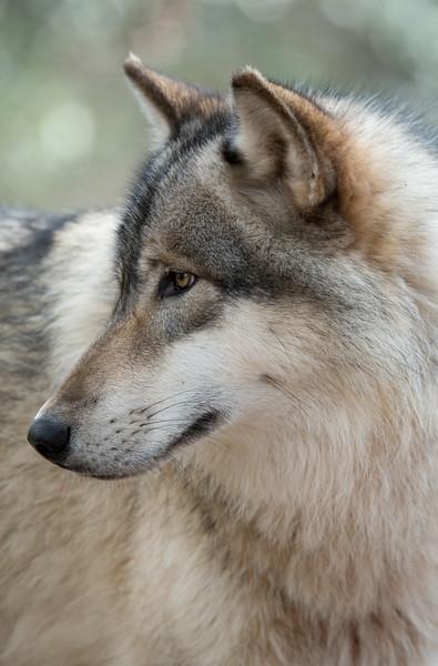 Seacrest Wolves_-30.jpg