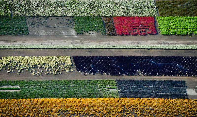 . Plants form a colorful pattern at a nursery in the east metro. (Pioneer Press: Ben Garvin)