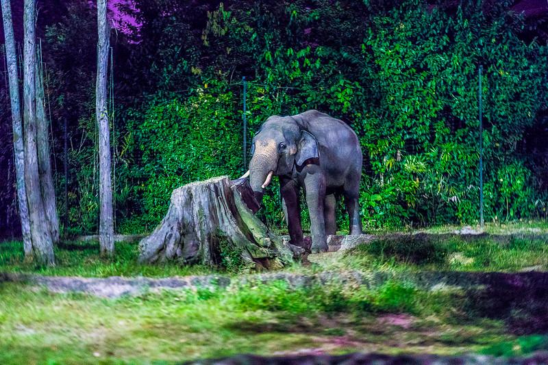 Night-Safari-9588.jpg