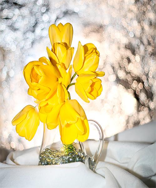 115.Mary Martindale.1.Yellow tulips.jpg