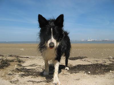 Nikon-Dog-Pics