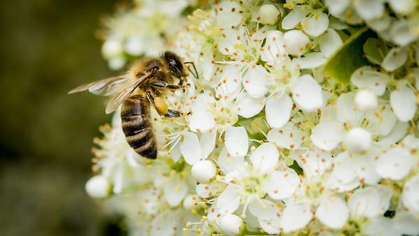 Bees June 1 2014