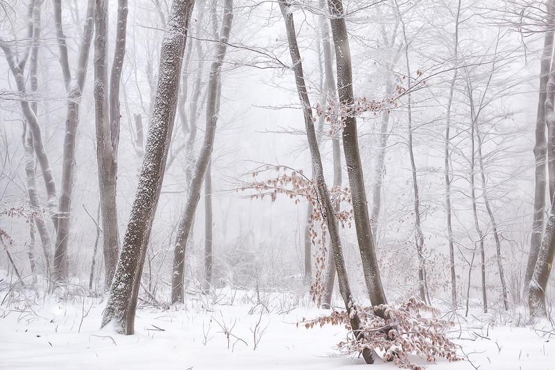 2017-02-02_Wiener Wald037_web.jpg