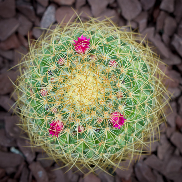 Kurt's Flora (24 of 41).jpg