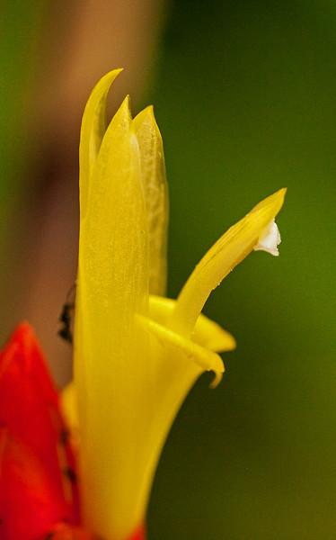 FLOWER 1 - EDITED.jpg