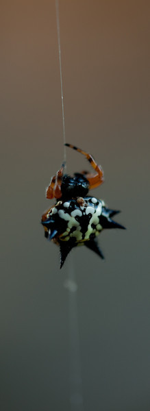 Funky spider